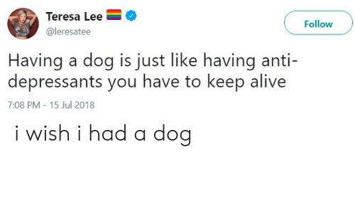 teresa: Teresa Lee  Follow  @leresatee  Having a dog is just like having anti-  depressants you have to keep alive  7:08 PM -15 Jul 2018 i wish i had a dog
