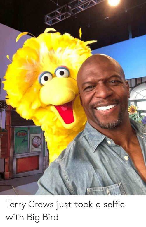Big Bird: Terry Crews just took a selfie with Big Bird