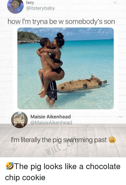 Memes, Chocolate, and Swimming: tery  @itsterybaby  how I'm tryna be w somebody's son  Maisie Aikenhead  MaisieAikenhead  Im literally the pig swimming past 🤣The pig looks like a chocolate chip cookie