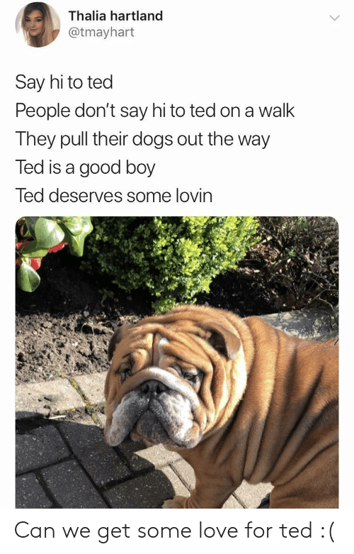 Dogs, Love, and Ted: Thalia hartland  @tmayhart  Say hi to ted  People don't say hi to ted on a walk  They pull their dogs out the way  Ted is a good boy  Ted deserves some lovin Can we get some love for ted :(