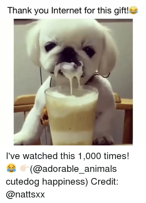 Animals, Internet, and Memes: Thank you Internet for this gift! I've watched this 1,000 times! 😂 👉🏻(@adorable_animals cutedog happiness) Credit: @nattsxx