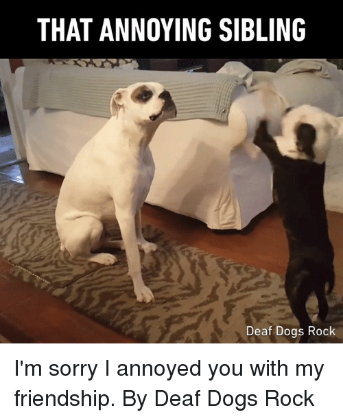 Dank, Dogs, and Sorry: THAT ANNOYING SIBLING  Deaf Dogs Rock I'm sorry I annoyed you with my friendship.  By Deaf Dogs Rock