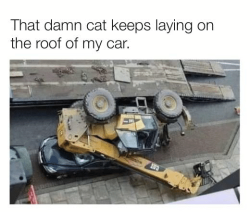 Dank, 🤖, and Cat: That damn cat keeps laying on  the roof of my car.