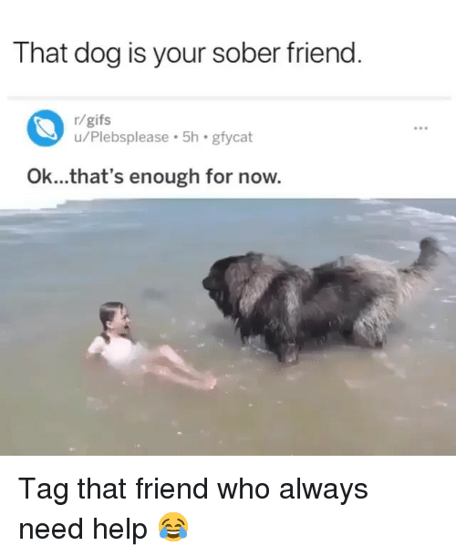 Funny, Gifs, and Help: That dog is your sober friend  r/gifs  u/Plebsplease 5h gfycat  Ok...that's enough for now. Tag that friend who always need help 😂