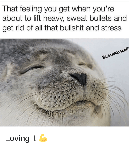 Gym, All That, and Bullshit: That feeling you get when you're  about to lift heavy, sweat bullets and  get rid of all that bullshit and stress  ALAF  BLAC Loving it 💪