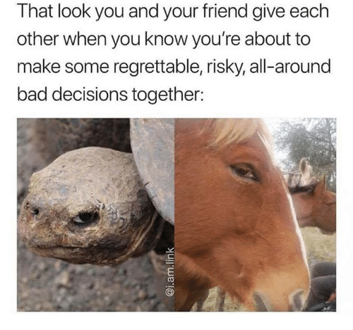 Bad, Regrettable, and Decisions: That look you and your friend give each  other when you know you're about to  make some regrettable, risky, all-around  bad decisions together: