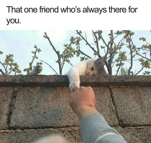 That One Friend: That one friend who's always there for  you.