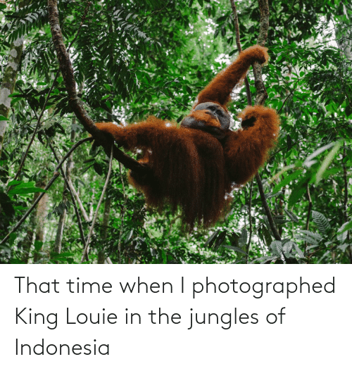 Indonesia: That time when I photographed King Louie in the jungles of Indonesia