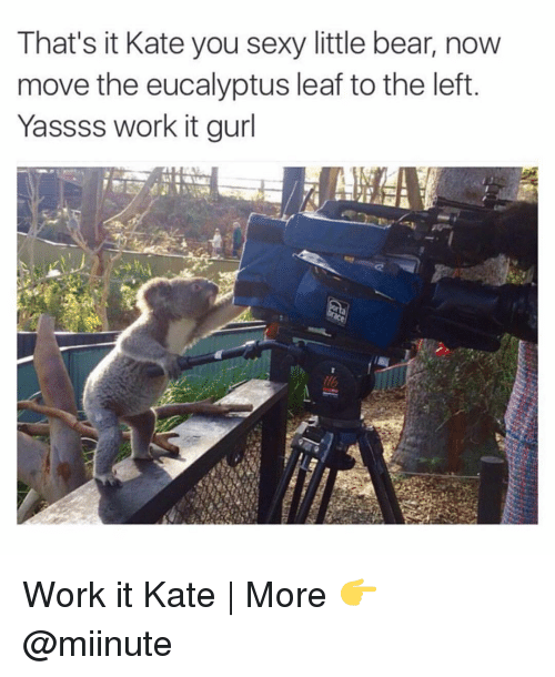 You Sexy: That's it Kate you sexy little bear, now  move the eucalyptus leaf to the left  Yassss work it gurl Work it Kate | More 👉 @miinute