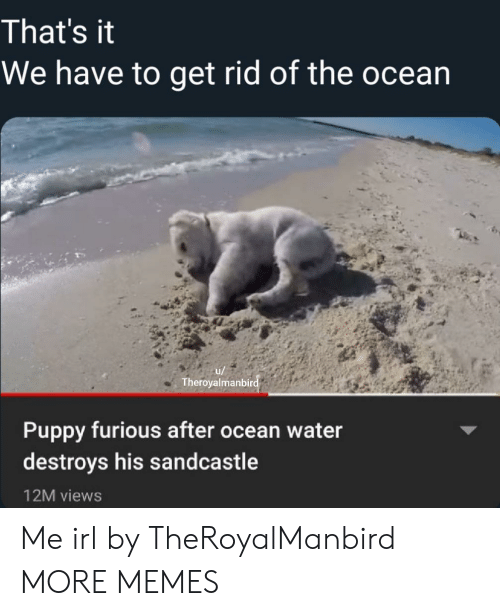Dank, Memes, and Target: That's it  We have to get rid of the ocean  u/  Theroyalmanbird  Puppy furious after ocean water  destroys his sandcastle  12M views Me irl by TheRoyalManbird MORE MEMES