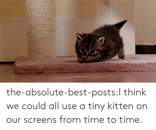 Target, Tumblr, and Best: the-absolute-best-posts:I think we could all use a tiny kitten on our screens from time to time.
