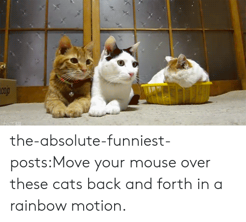 motion: the-absolute-funniest-posts:Move your mouse over these cats back and forth in a rainbow motion.