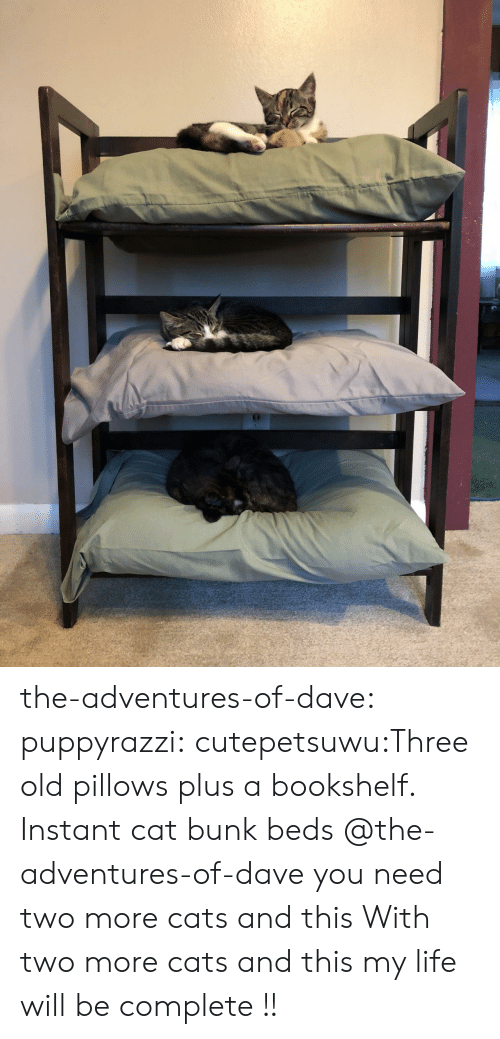 Cats, Life, and Tumblr: the-adventures-of-dave:  puppyrazzi:  cutepetsuwu:Three old pillows plus a bookshelf. Instant cat bunk beds  @the-adventures-of-dave you need two more cats and this  With two more cats and this my life will be complete !!