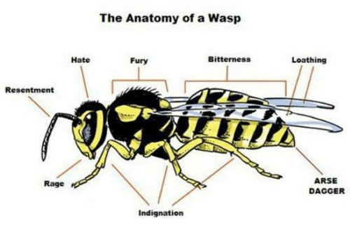 Memes, 🤖, and Fury: The Anatomy of a Wasp  Hate  Bitterness  Fury  Resentment  Rage  Indignation  Loathing  ARSE  DAGGER