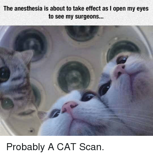 cat scan: The anesthesia is about to take effect as I open my eyes  to see my surgeons... <p>Probably A CAT Scan.</p>
