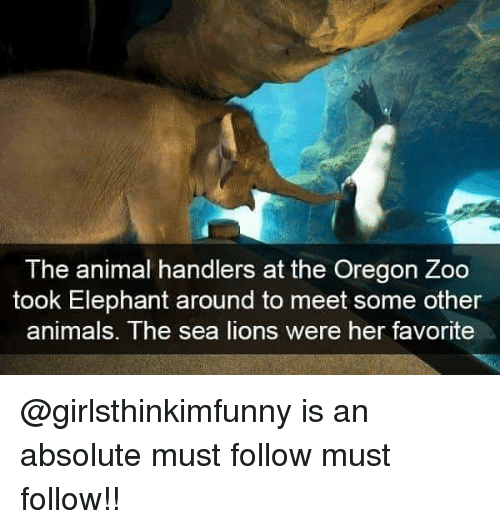 Animals, Memes, and Animal: The animal handlers at the Oregon Zoo  took Elephant around to meet some other  animals. The sea lions were her favorite @girlsthinkimfunny is an absolute must follow must follow!!