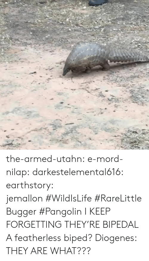 bipedal: the-armed-utahn: e-mord-nilap:  darkestelemental616:  earthstory:  jemallon#WildIsLife#RareLittleBugger#Pangolin  I KEEP FORGETTING THEY'RE BIPEDAL  A featherless biped? Diogenes:   THEY ARE WHAT???
