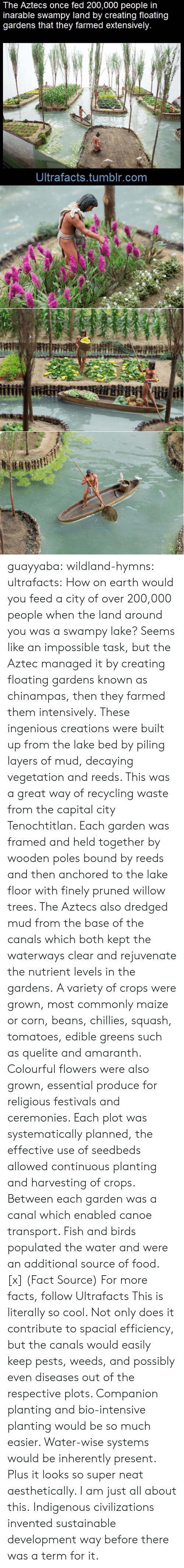 creations: The Aztecs once fed 200,000 people in  inarable swampy land by creating floating  gardens that they farmed extensively.  Ultrafacts.tumblr.com guayyaba: wildland-hymns:  ultrafacts:  How on earth would you feed a city of over 200,000 people when the land around you was a swampy lake? Seems like an impossible task, but the Aztec managed it by creating floating gardens known as chinampas, then they farmed them intensively. These ingenious creations were built up from the lake bed by piling layers of mud, decaying vegetation and reeds. This was a great way of recycling waste from the capital city Tenochtitlan. Each garden was framed and held together by wooden poles bound by reeds and then anchored to the lake floor with finely pruned willow trees. The Aztecs also dredged mud from the base of the canals which both kept the waterways clear and rejuvenate the nutrient levels in the gardens. A variety of crops were grown, most commonly maize or corn, beans, chillies, squash, tomatoes, edible greens such as quelite and amaranth. Colourful flowers were also grown, essential produce for religious festivals and ceremonies. Each plot was systematically planned, the effective use of seedbeds allowed continuous planting and harvesting of crops. Between each garden was a canal which enabled canoe transport. Fish and birds populated the water and were an additional source of food. [x] (Fact Source) For more facts, follow Ultrafacts   This is literally so cool. Not only does it contribute to spacial efficiency, but the canals would easily keep pests, weeds, and possibly even diseases out of the respective plots. Companion planting and bio-intensive planting would be so much easier. Water-wise systems would be inherently present. Plus it looks so super neat aesthetically. I am just all about this.   Indigenous civilizations invented sustainable development way before there was a term for it.