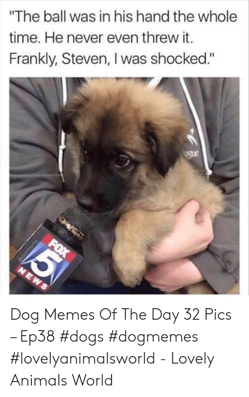 """Animals, Dogs, and Memes: The ball was in his hand the whole  time. He never even threw it.  Frankly, Steven, I was shocked.""""  ague Dog Memes Of The Day 32 Pics – Ep38 #dogs #dogmemes #lovelyanimalsworld - Lovely Animals World"""