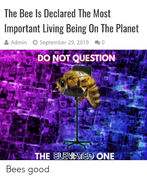 The Most Important: The Bee Is Declared The Most  Important Living Being On The Planet  Admin  September 29, 2019  0  DO NOT QUESTION  THE ELEVATED ONE Bees good
