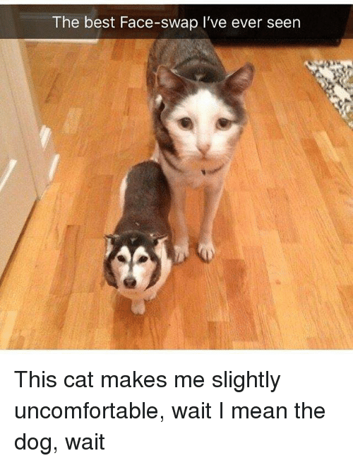Dank, Face Swap, and Best: The best Face-swap I've ever seen This cat makes me slightly uncomfortable, wait I mean the dog, wait