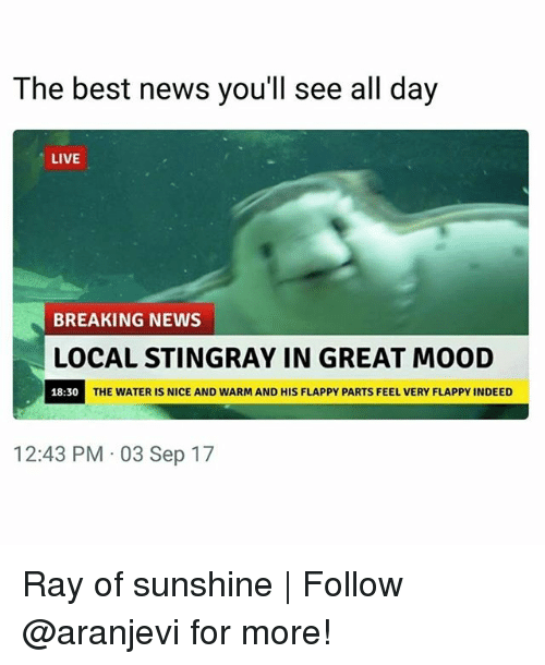 Memes, Mood, and News: The best news you'll see all day  LIVE  BREAKING NEWS  LOCAL STINGRAY IN GREAT MOOD  18:30  THE WATER IS NICE AND WARM AND HIS FLAPPY PARTS FEEL VERY FLAPPY INDEED  12:43 PM 03 Sep 17 Ray of sunshine | Follow @aranjevi for more!