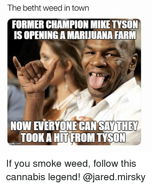 Memes, Mike Tyson, and Weed: The betht weed in town  FORMER CHAMPION MIKE TYSON  IS OPENING A MARIJUANA FARM  NOW EVERYONE CAN SAY THEY  TOOK A HITFROM TYSON If you smoke weed, follow this cannabis legend! @jared.mirsky