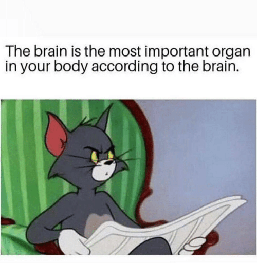 Brain, According, and Organ: The brain is the most important organ  in your body according to the brain.