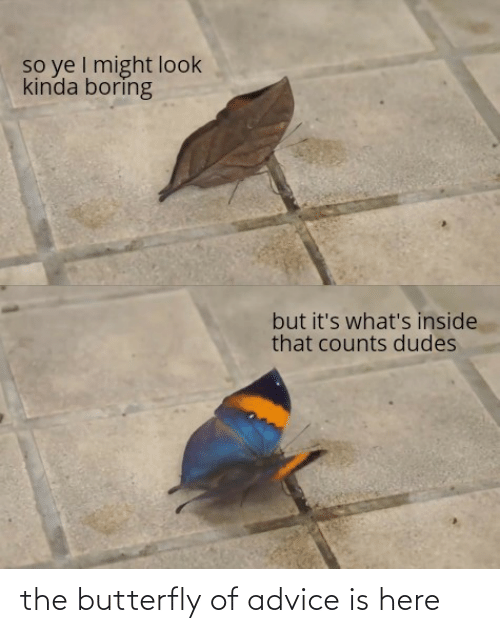 Butterfly: the butterfly of advice is here