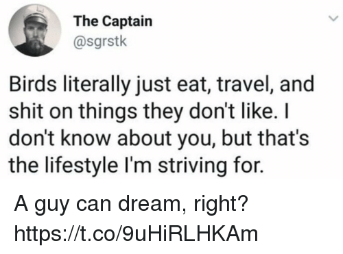 Funny, Shit, and Birds: The Captain  @sgrstk  Birds literally just eat, travel, and  shit on things they don't like.I  don't know about you, but that's  the lifestyle I'm striving for. A guy can dream, right? https://t.co/9uHiRLHKAm