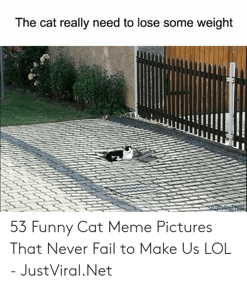 Fail, Funny, and Lol: The cat really need to lose some weight  JusViralNet 53 Funny Cat Meme Pictures That Never Fail to Make Us LOL - JustViral.Net