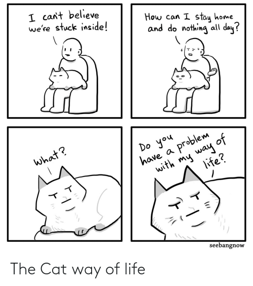 The: The Cat way of life