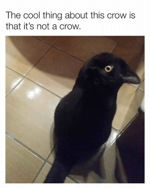 Dank, Cool, and 🤖: The cool thing about this crow is  that it's not a crow.