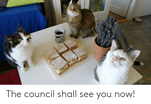 You Now: The council shall see you now!