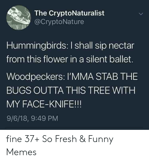 Ballet: The CryptoNaturalist  @CryptoNature  VTONATURA  Hummingbirds: I shall sip nectar  from this flower in a silent ballet.  Woodpeckers: l'MMA STAB THE  BUGS OUTTA THIS TREE WITH  MY FACE-KNIFE!!!  9/6/18, 9:49 PM fine 37+ So Fresh & Funny Memes