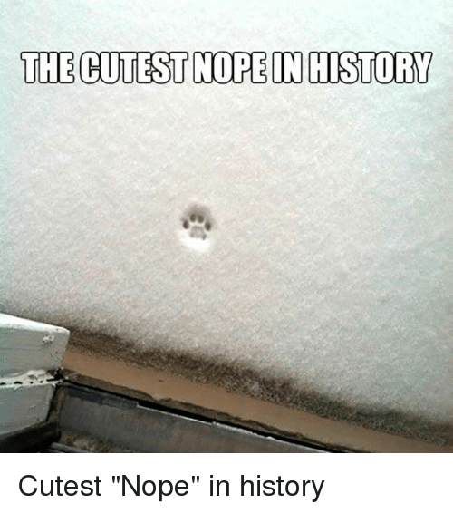 """History, Nope, and Cutest: THE CUTEST NOPE IN HISTORY Cutest """"Nope"""" in history"""