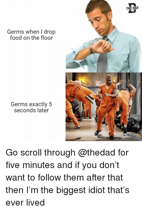 Dad, Food, and Funny: THE DAD  Germs when I drop  food on the floor  Germs exactly 5  seconds later Go scroll through @thedad for five minutes and if you don't want to follow them after that then I'm the biggest idiot that's ever lived
