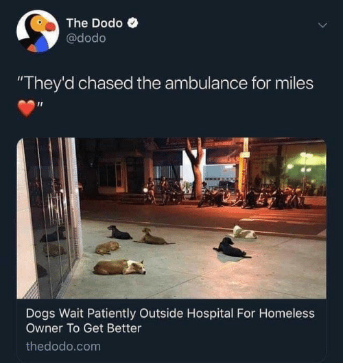 "Dogs, Homeless, and Hospital: The Dodo  @dodo  ""They'd chased the ambulance for miles  Dogs Wait Patiently Outside Hospital For Homeless  Owner To Get Better  thedodo.com"