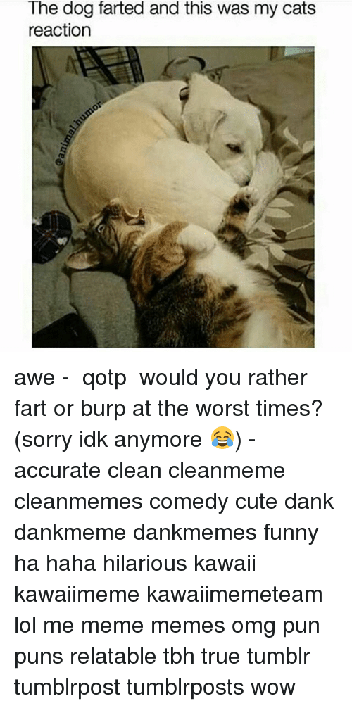 Dog Farted: The dog farted and this was my cats  reaction awe - ✿ qotp ↬ would you rather fart or burp at the worst times? (sorry idk anymore 😂) - accurate clean cleanmeme cleanmemes comedy cute dank dankmeme dankmemes funny ha haha hilarious kawaii kawaiimeme kawaiimemeteam lol me meme memes omg pun puns relatable tbh true tumblr tumblrpost tumblrposts wow
