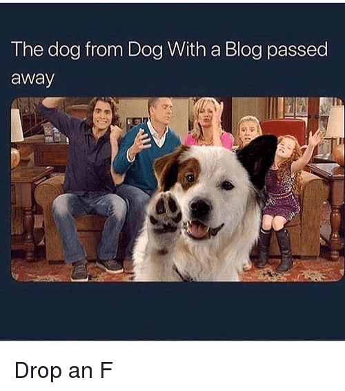 Funny, Blog, and Dog With a Blog: The dog from Dog With a Blog passed  away Drop an F