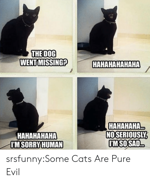 Cats, Tumblr, and Blog: THE DOG  WENT MISSING?  HAHAHAHAHAHA  HAHAHAHAHA  I'MSORRY HUMAN  HAHAHAHA  NOSERIOUSLY  MSOSAD srsfunny:Some Cats Are Pure Evil