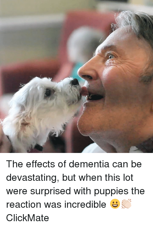 Dank, Puppies, and Dementia: The effects of dementia can be devastating, but when this lot were surprised with puppies the reaction was incredible 😀👏🏻  ClickMate