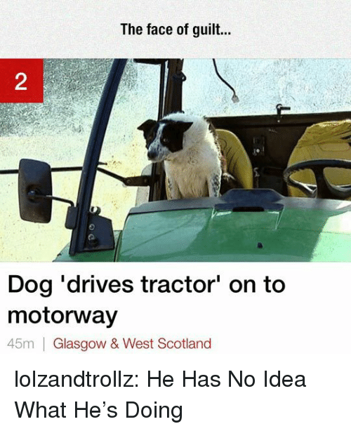 Tumblr, Blog, and Http: The face of guilt  2  Dog 'drives tractor' on to  motorway  45m Glasgow & West Scotland lolzandtrollz:  He Has No Idea What He's Doing