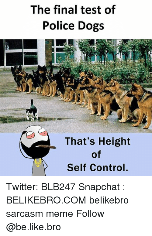 Be Like, Dogs, and Meme: The final test of  Police Dogs  That's Height  of  Self Control, Twitter: BLB247 Snapchat : BELIKEBRO.COM belikebro sarcasm meme Follow @be.like.bro