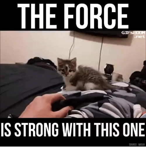 Dank, Imgur, and Strong: THE FORCE  IS STRONG WITH THIS ONE  SOURCE: IMGUR