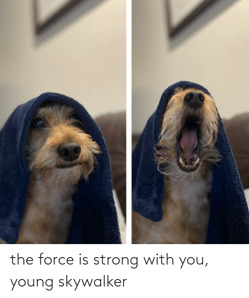 Force Is Strong: the force is strong with you, young skywalker