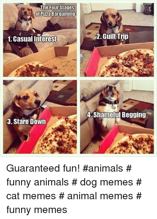 Animals, Funny, and Funny Animals: The Four Stages  of Pizza Bargaining  1, Casual Interest  2. Guilt Trin  A Shameful Begging  3. Stare Down Guaranteed fun! #animals # funny animals # dog memes # cat memes # animal memes # funny memes