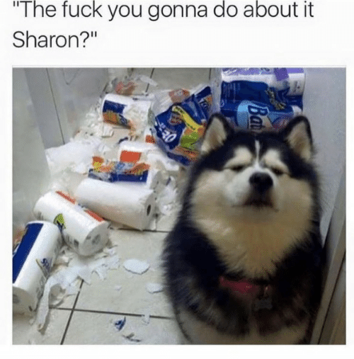 """Fuck You, Fuck, and You: The fuck you gonna do about it  Sharon?"""""""
