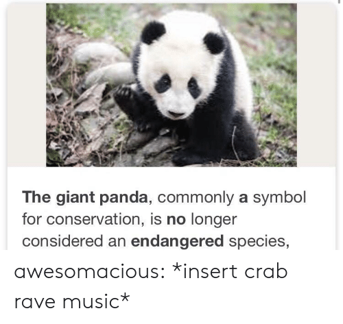 Music, Tumblr, and Panda: The giant panda, commonly a symbol  for conservation, is no longer  considered an endangered species, awesomacious:  *insert crab rave music*