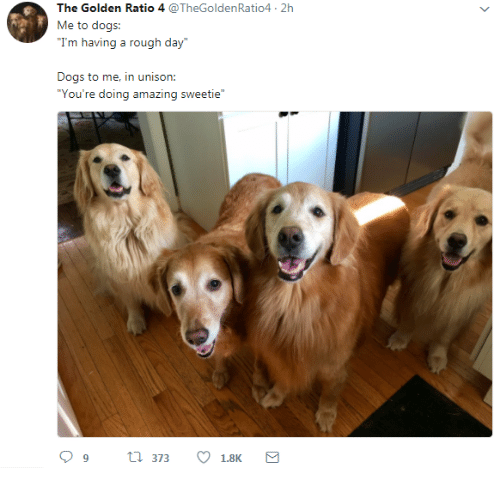 """Dogs, Amazing, and Golden Ratio: The Golden Ratio 4 @TheGoldenRatio4 2h  Me to dogs:  Trm tviij a rugh diy  Dogs to me, in unison:  """"You're doing amazing sweetie"""